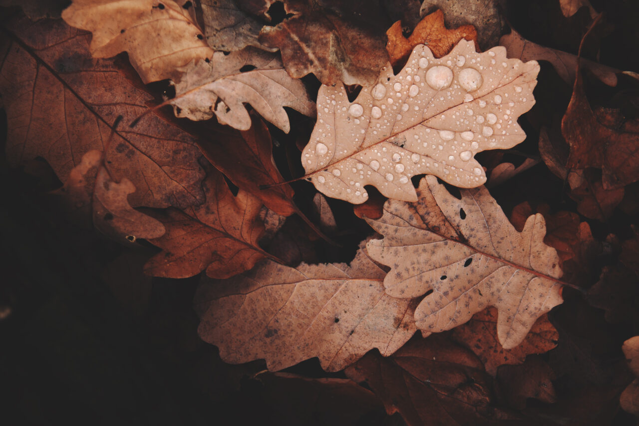 Autumn, a season of gatherings and warmth