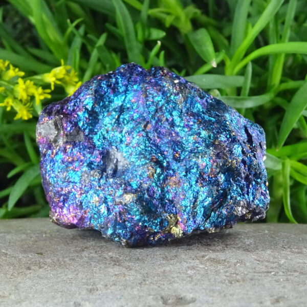 peacock ore at surrendertohappiness.com